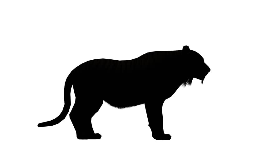 852x480 Tiger Running Sketch Silhouette,wildlife Animals Habitat. Cg 02098