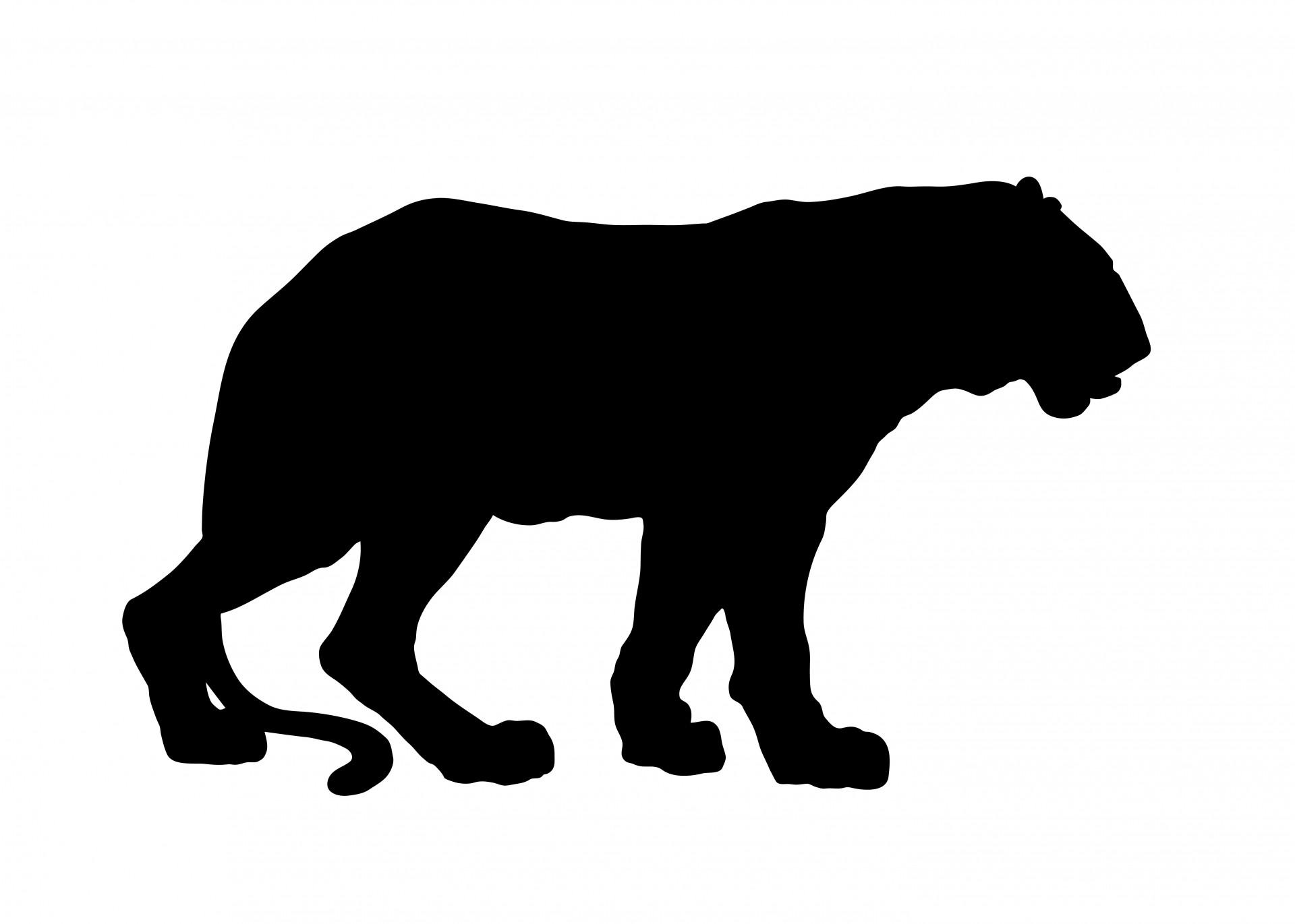 1920x1371 Tiger Silhouette Free Stock Photo