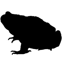 240x240 Toad Silhouette Vector Graphics