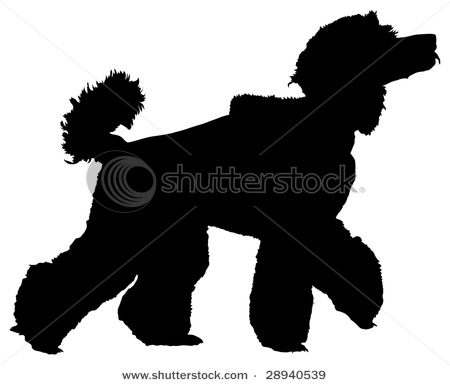 450x385 Picture Of Standard Poodle Walking With His Head Held High In