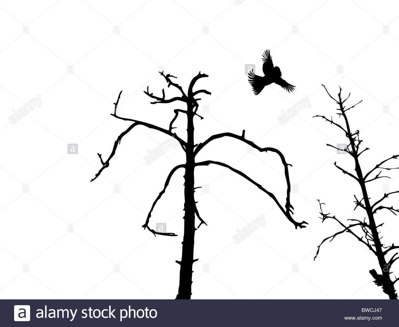 1300x1065 Silhouette Dry Tree And Birds Isolated On White Background Stock