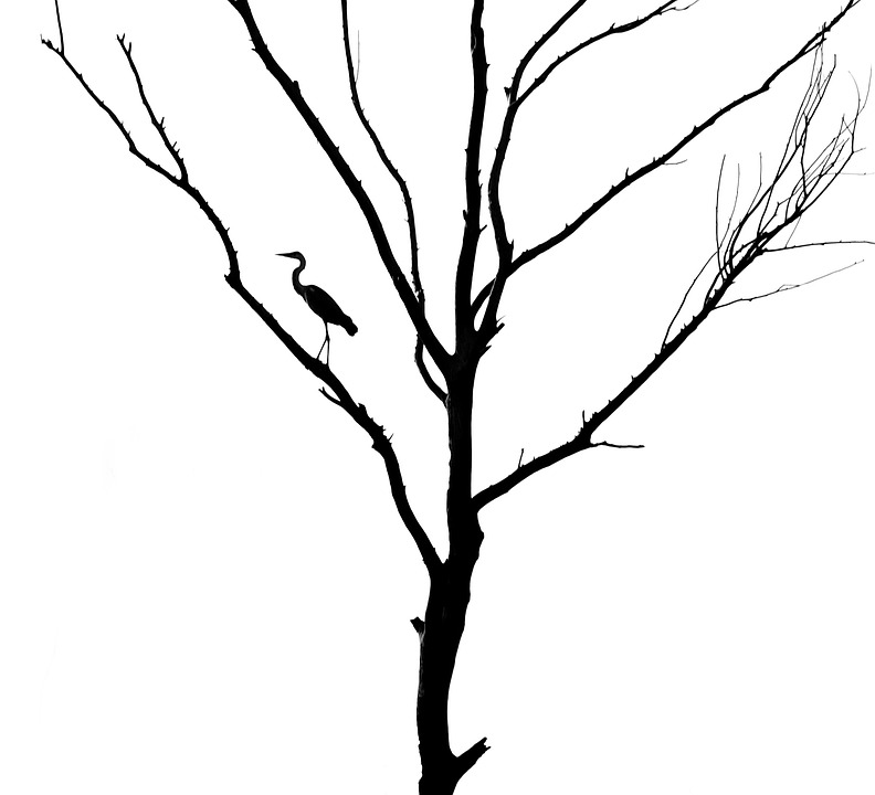 792x720 Free Photo Heron Silhouette Bird Dead Tree Gray Heron Tree