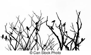 300x182 Raven Birds And Bare Tree Branches Silhouette. Black Dry Stock