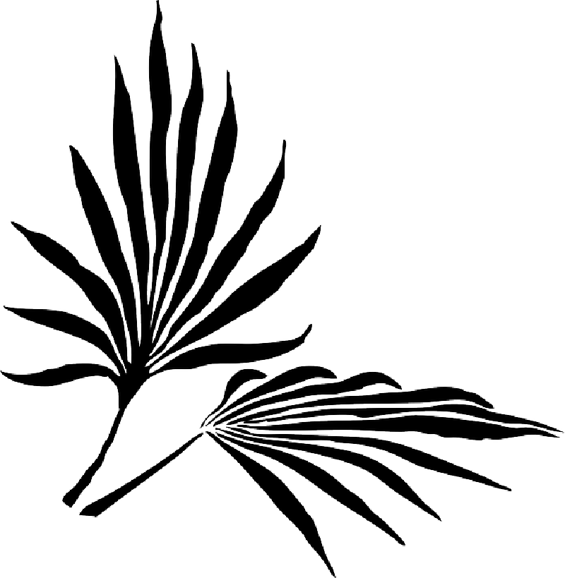 800x819 Tree Branch Silhouette Png