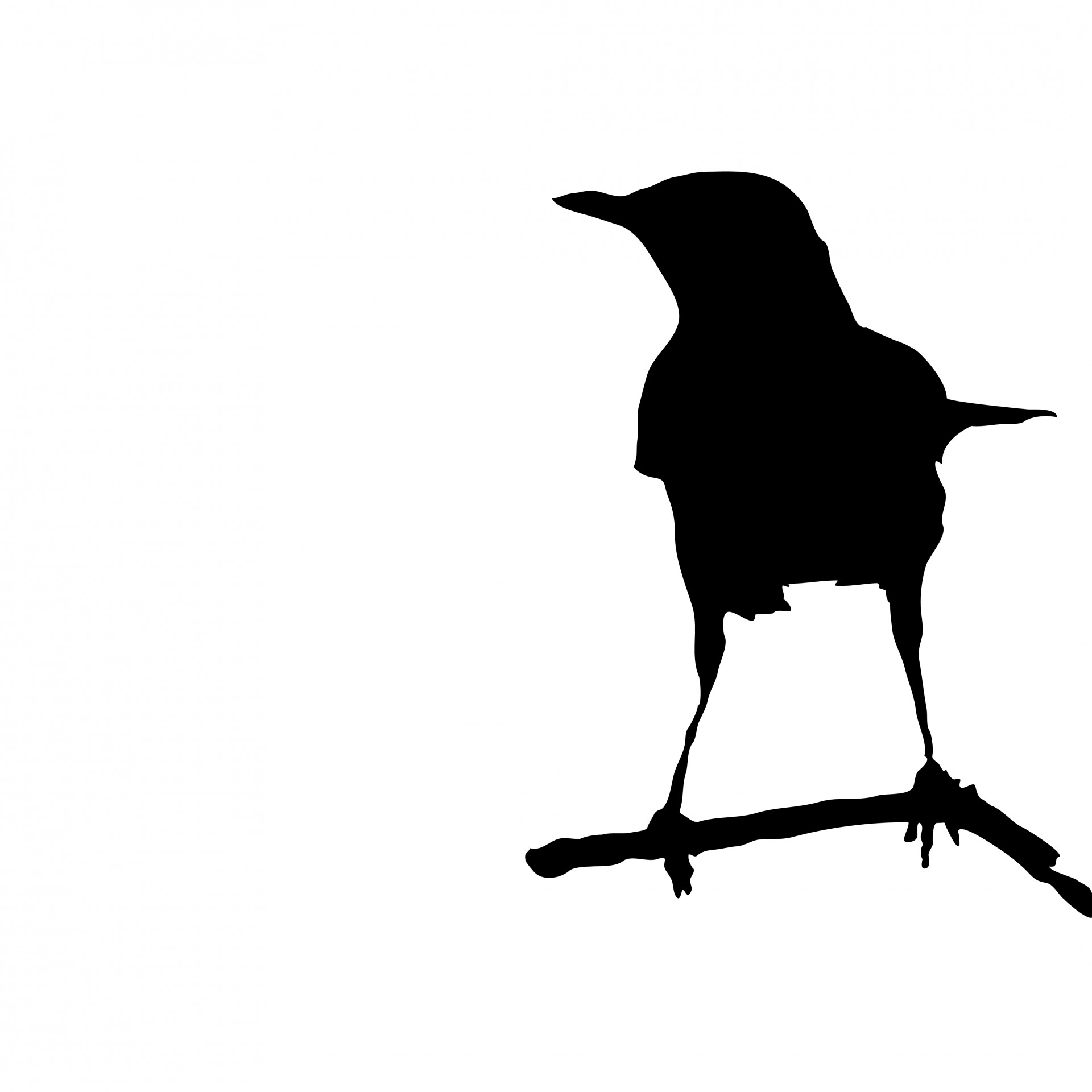 1920x1920 Bird Sitting On A Branch Silhouette