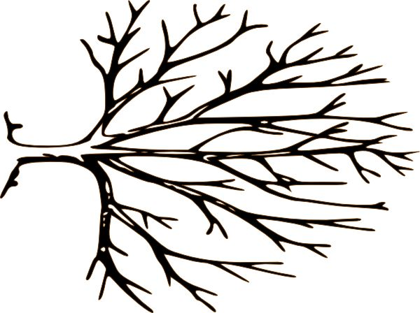 600x448 Branch Clipart Simple Branch