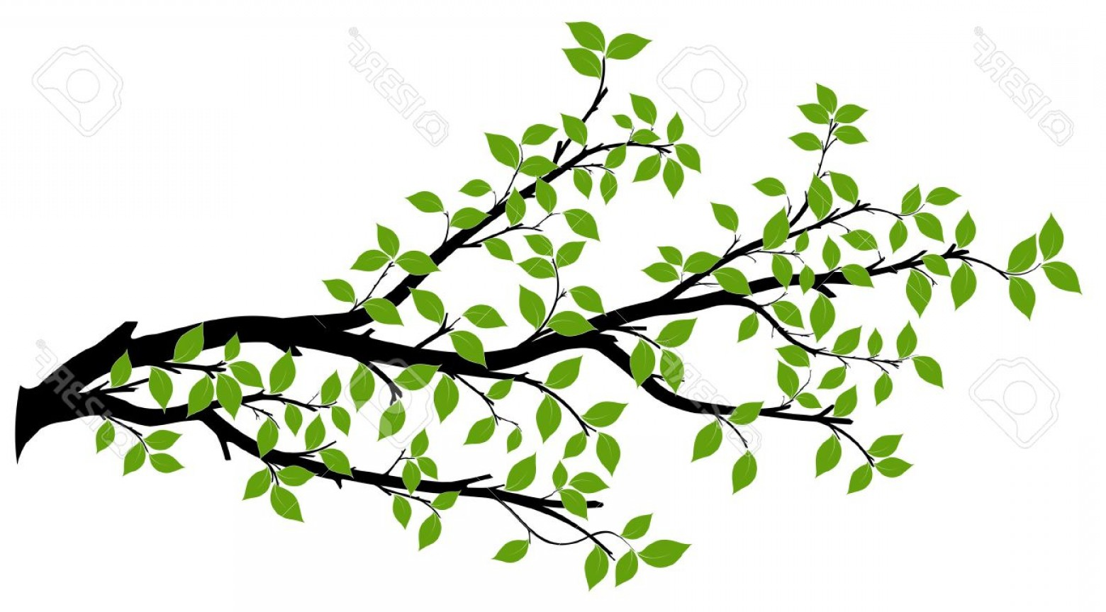 1560x864 Photostock Vector Tree Branch With Green Leaves Over White