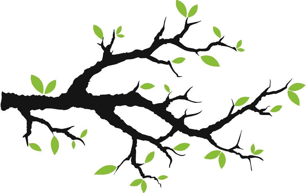 974x616 Tree Clipart Branch