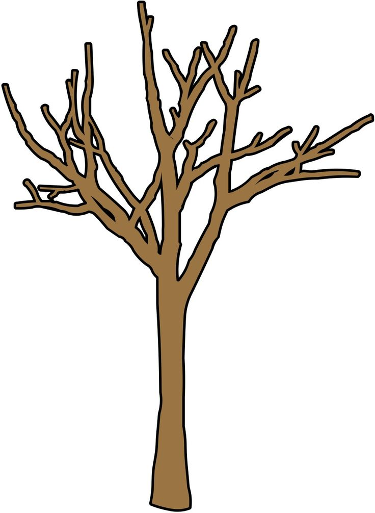 736x1006 Clipart Leafless Tree Branch Trunk Branches Pencil And In Color