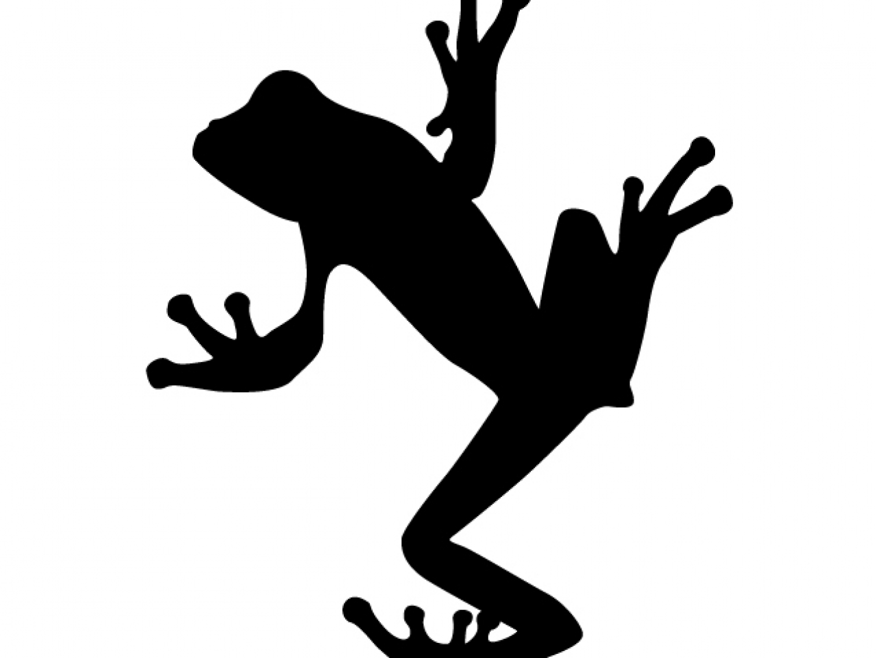 1279x960 Frog Confiscated By Hk Customs May Be New Species