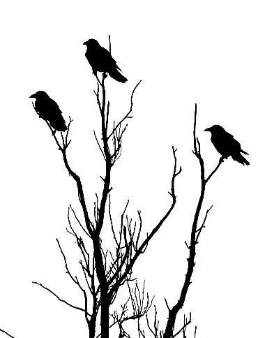 370x484 Ravens In Tree Stencil