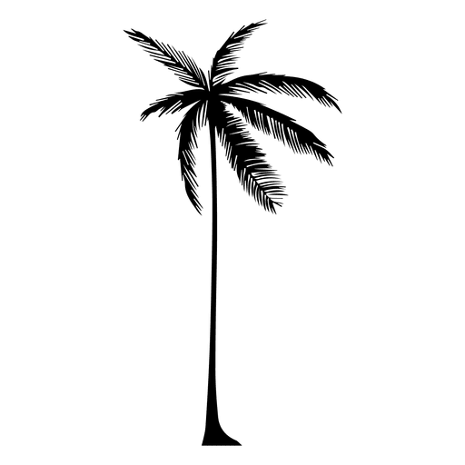 512x512 Silhouette Of A Palm Tree