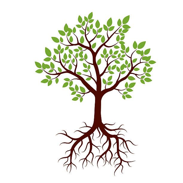 612x612 Shape Of Tree, Roots And Green Leafs. Vector Illustration. Vector