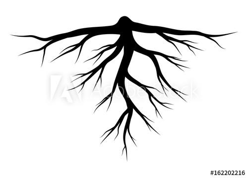 500x359 Root Silhouette Vector Symbol Icon Design.