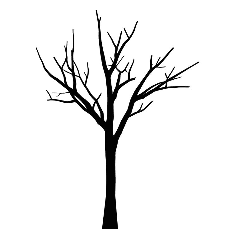 736x736 Tree Clipart Black And White No Leaves