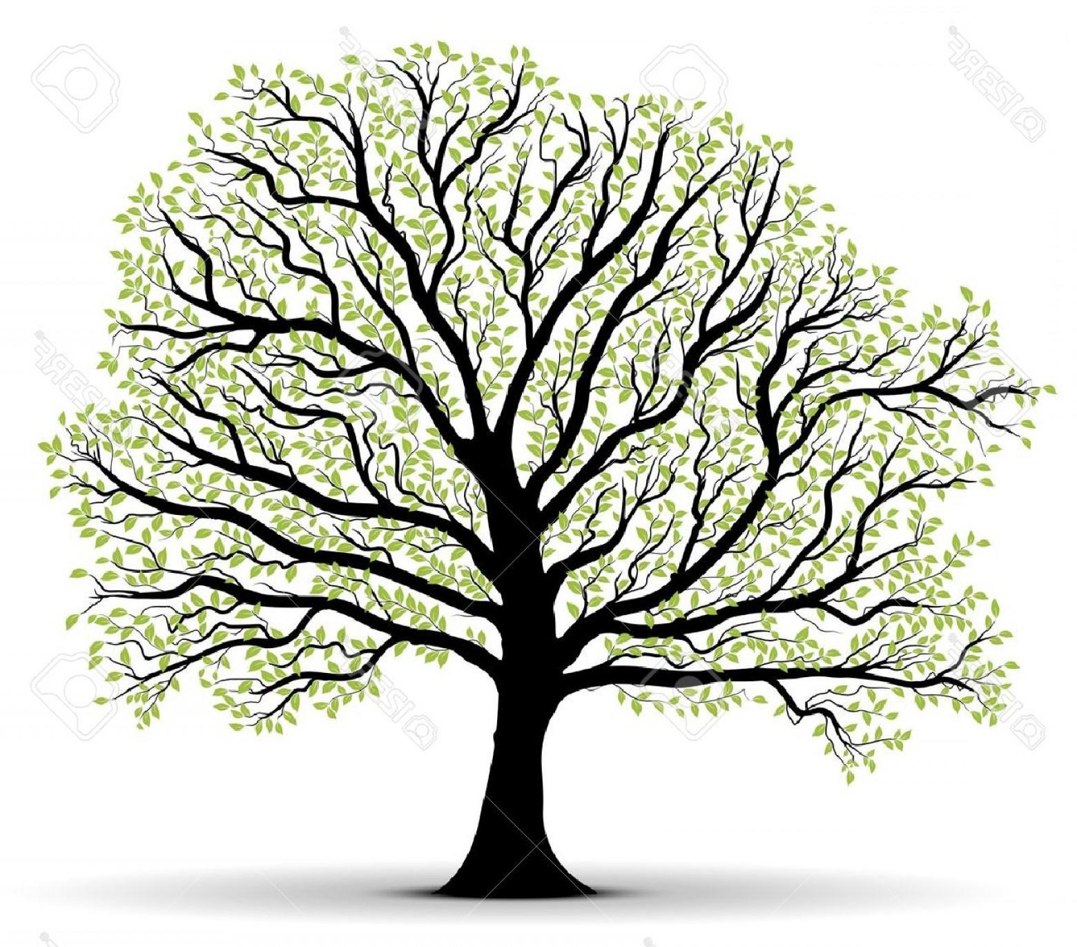 1560x1372 Big Vector Tree Arenawp