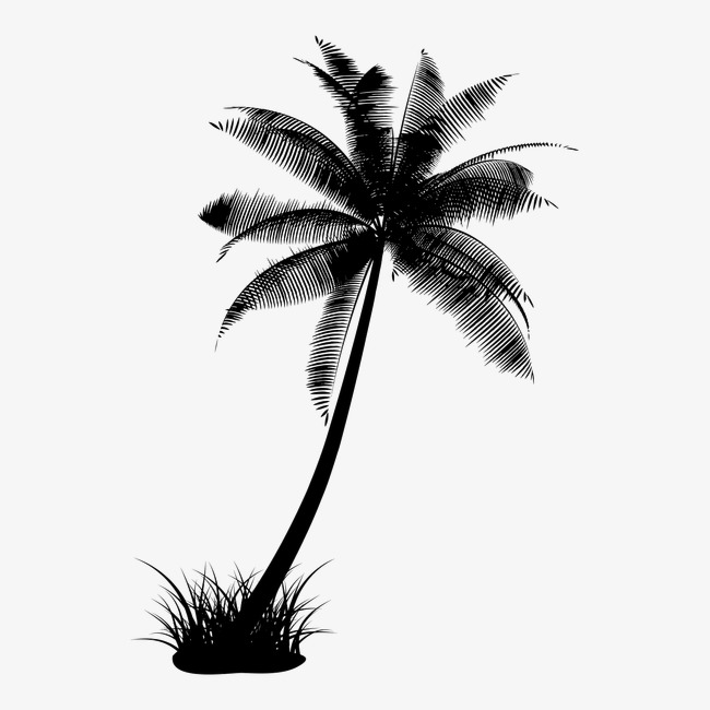 650x650 Coconut Trees Silhouette, Coco, Black And White, Sketch Png Image
