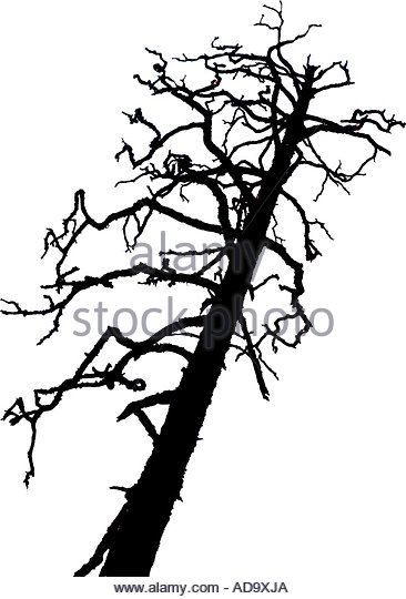 366x540 Twisted Branches Cut Out Stock Images Amp Pictures