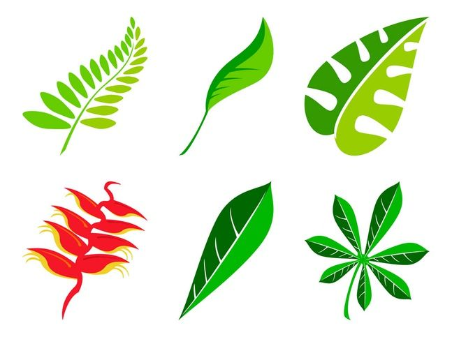 647x483 Leaves Set Vector Free Tree Silhouettes, Vectors, Clipart, Svg