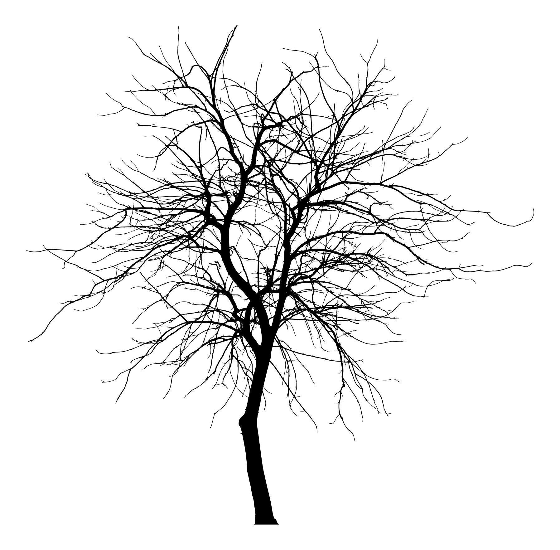 1796x1763 Skinny Tree Silhouette 4 Clipart