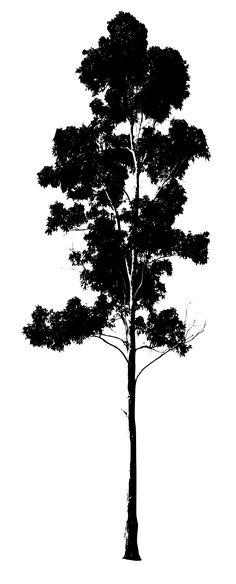 236x584 Dead Trees Vector