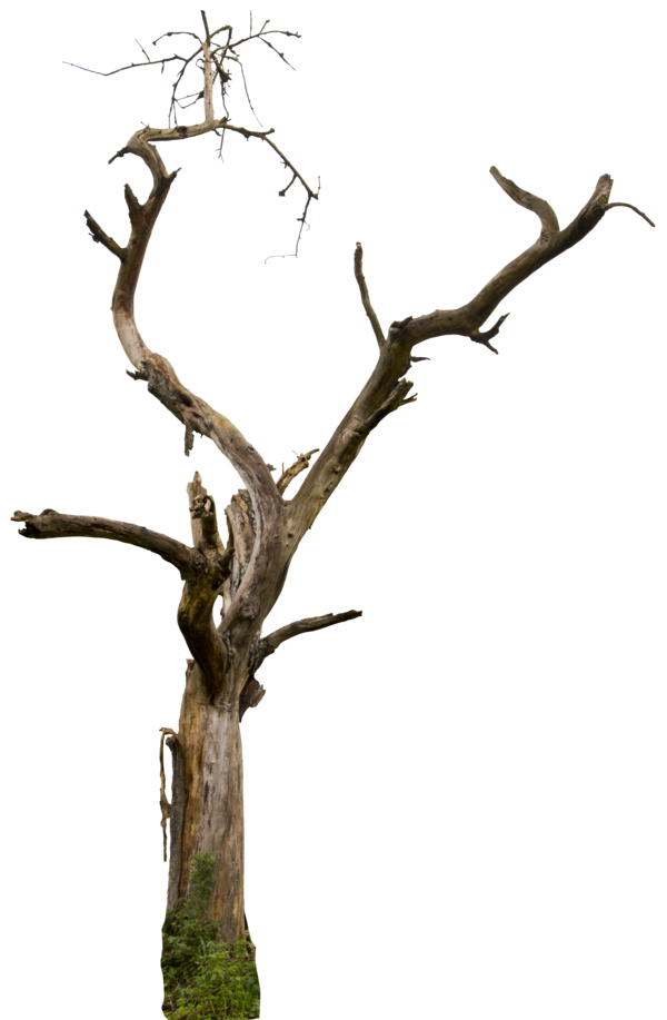 600x917 Dead Tree 04 Hq By On @ Psd