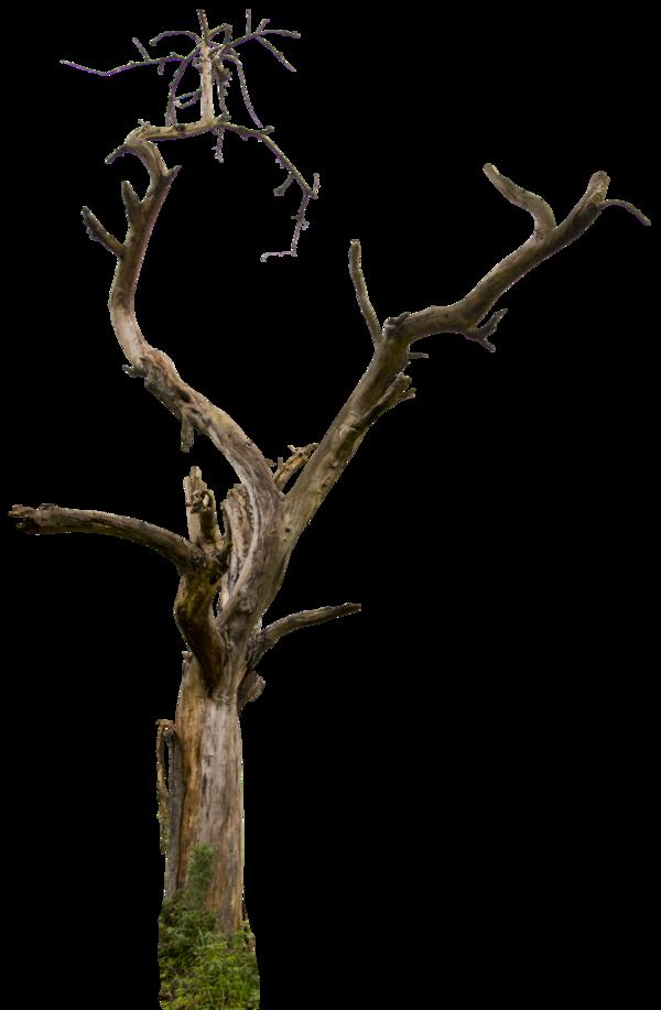 600x917 Dead tree 04 HQ by on @deviantART PSD