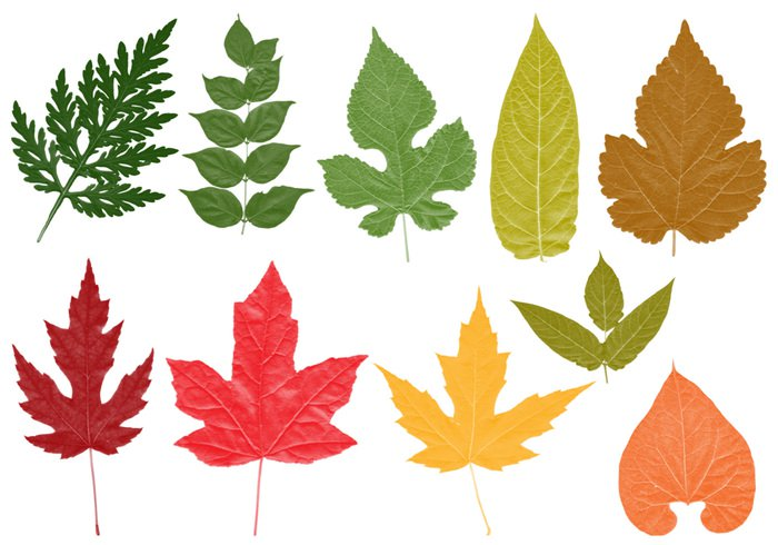 700x490 High Res Leaves