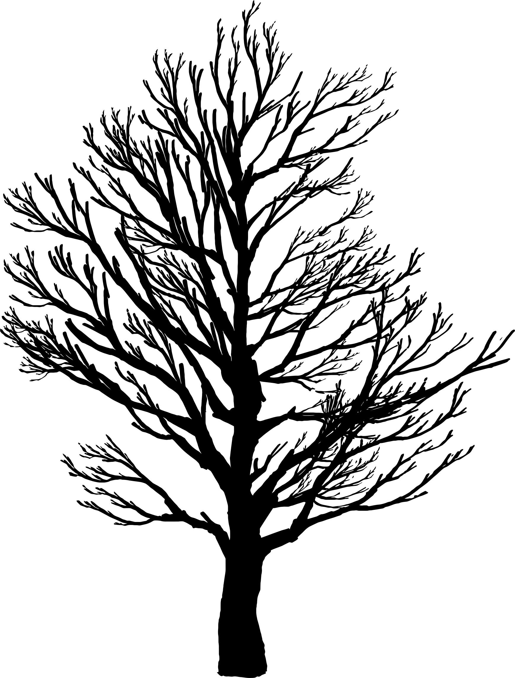 1738x2290 Barren Tree Silhouette 2 Icons Png