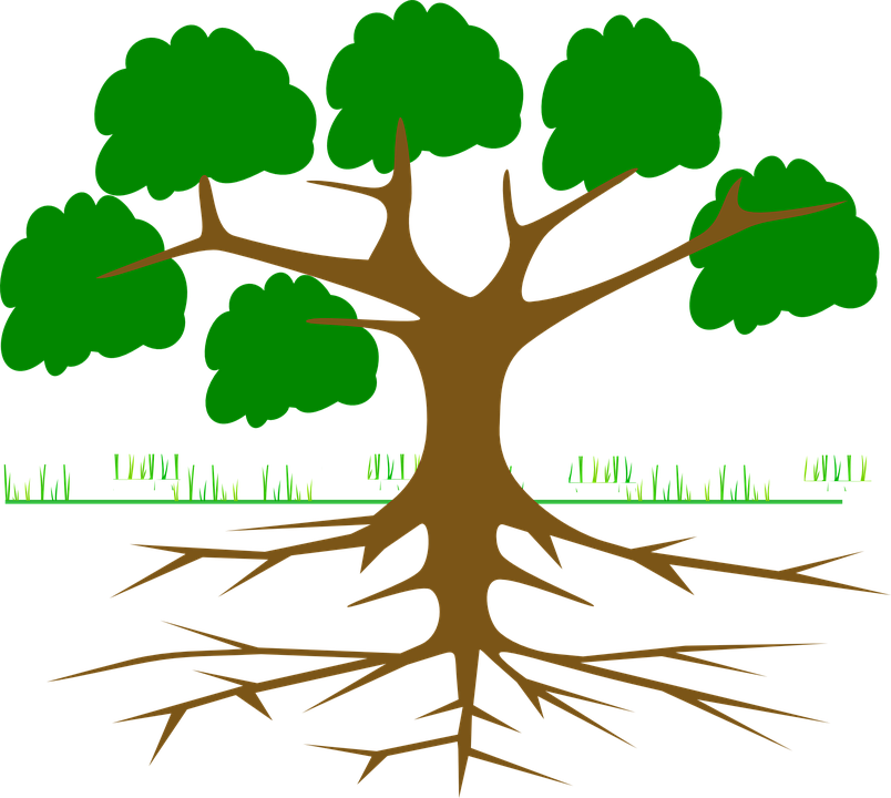 804x720 Roots Clipart Leave