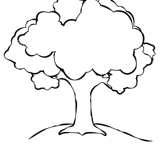 678x600 Outline Drawing Of A Tree Tree Silhouette Outline Cg Royalty Free