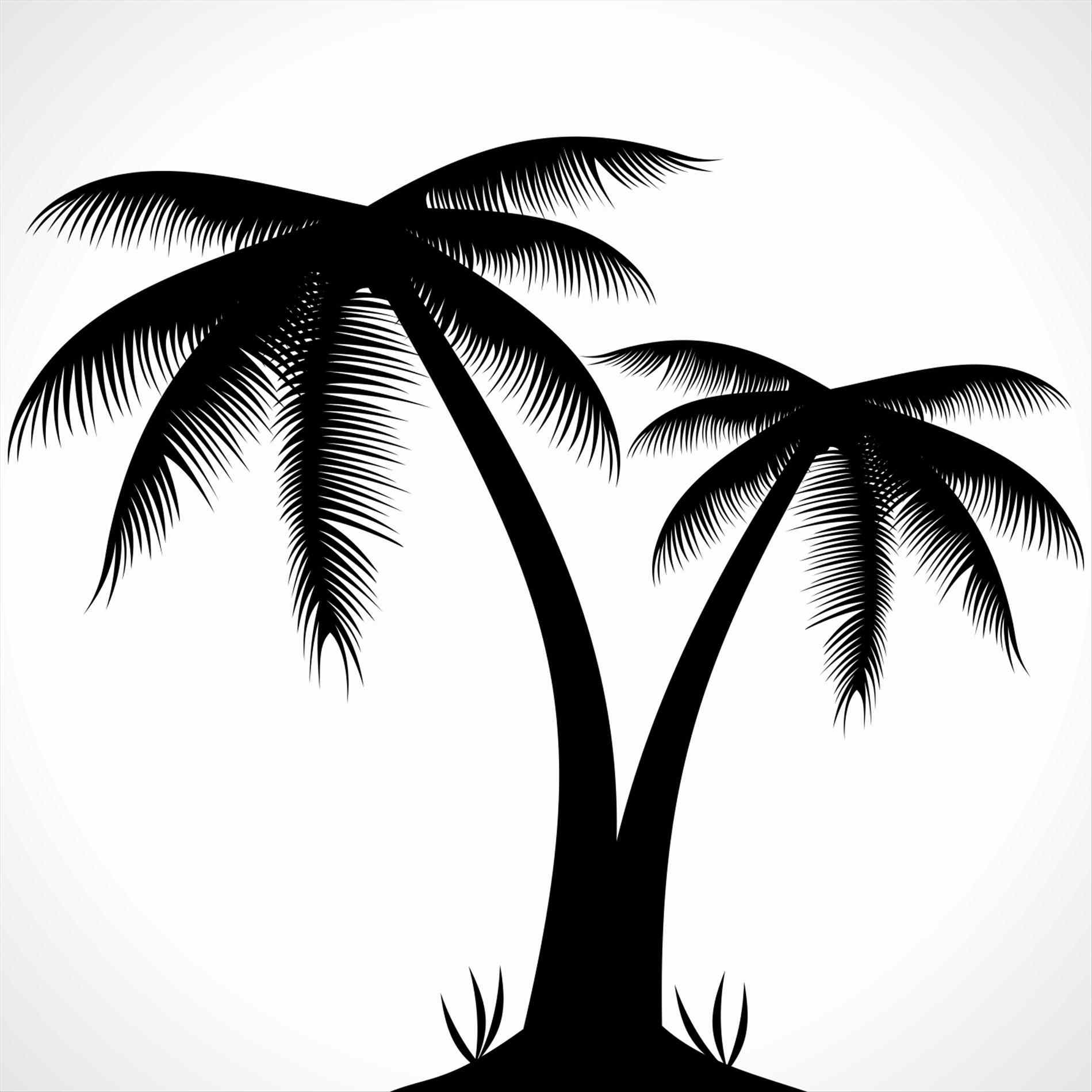 1899x1899 Interior Vectors Simple Palm Tree Silhouette Snapwitco