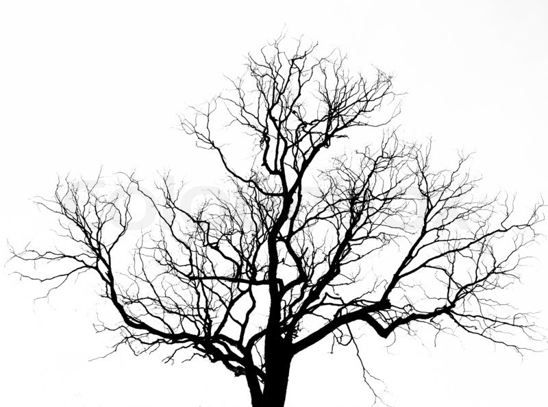 800x594 Tree Branch Transparent Background 4 Background Check All
