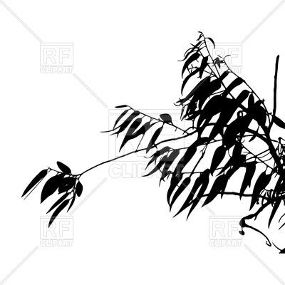 400x400 Eucalyptus Tree Silhouette Royalty Free Vector Clip Art Image