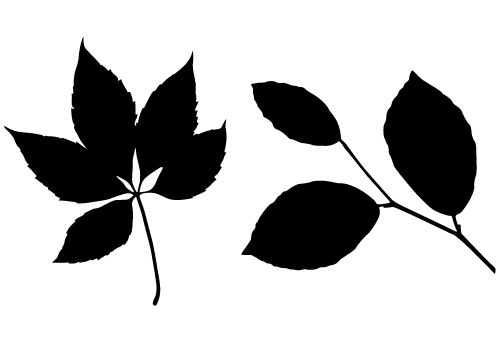 500x350 Leaf Silhouette Vector Free Download