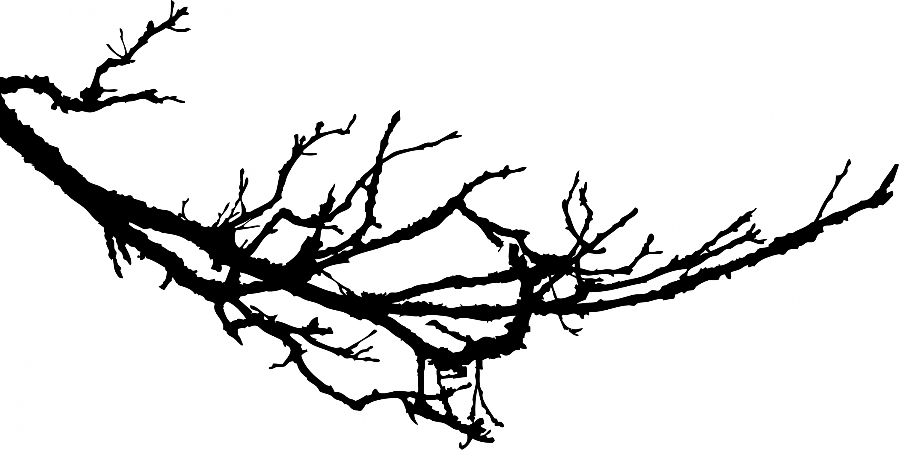 3000x1504 Branck With Birds Clipart Black And White