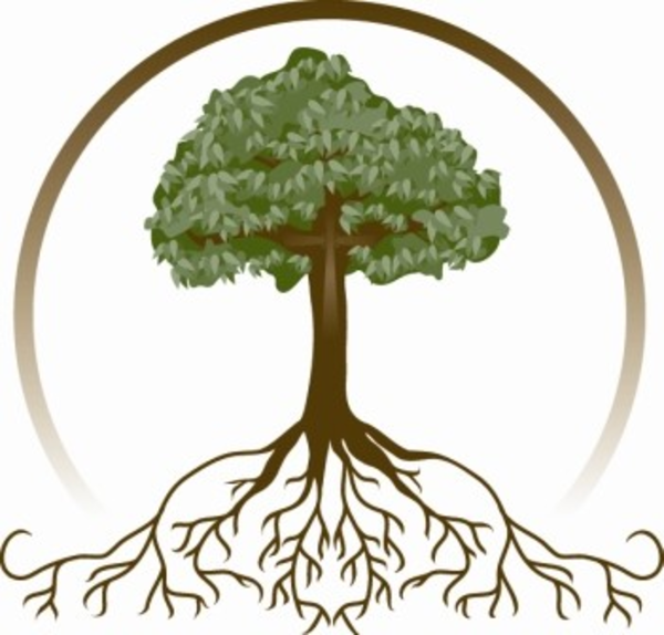 600x574 Oak Tree With Roots Clipart