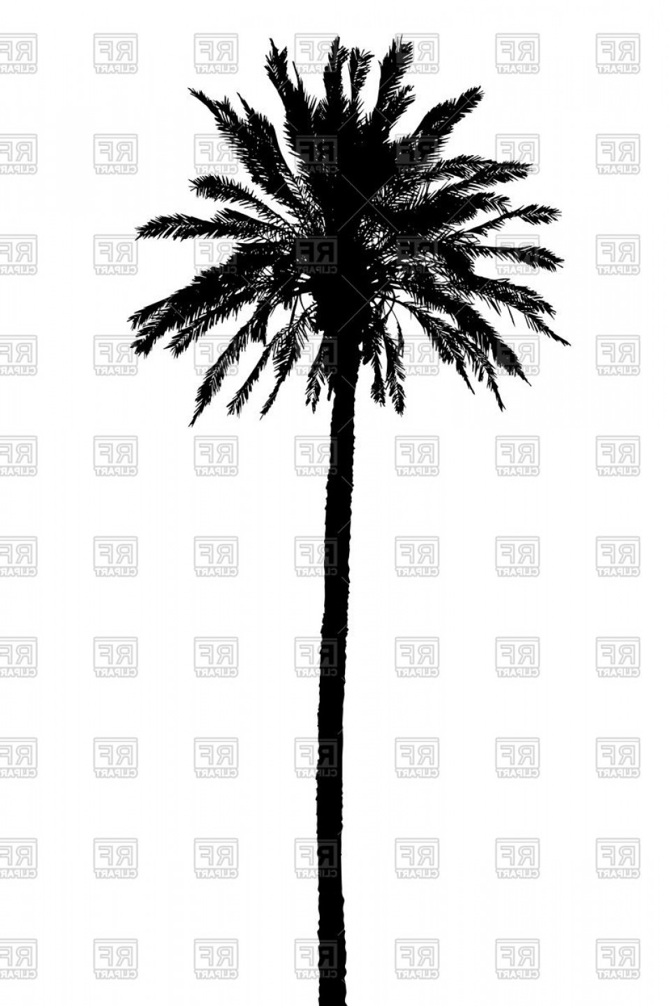 958x1440 Palm Tree In Vector Format Sohadacouri
