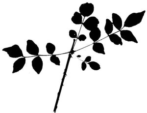 300x230 Learning To Identify Trees Let These Leaf Silhouettes Make It