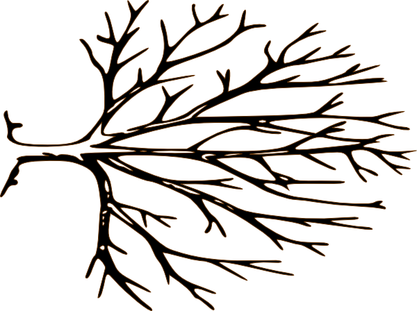 600x448 Roots Clipart Empty Tree