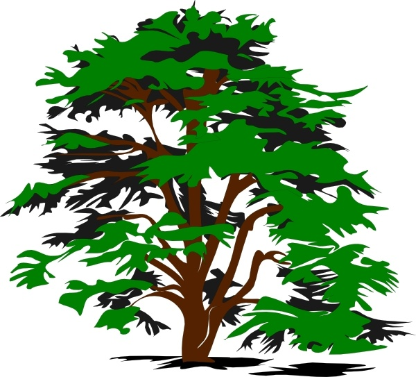 600x543 Simple Tree Clip Art Free Vector In Open Office Drawing Svg ( Svg