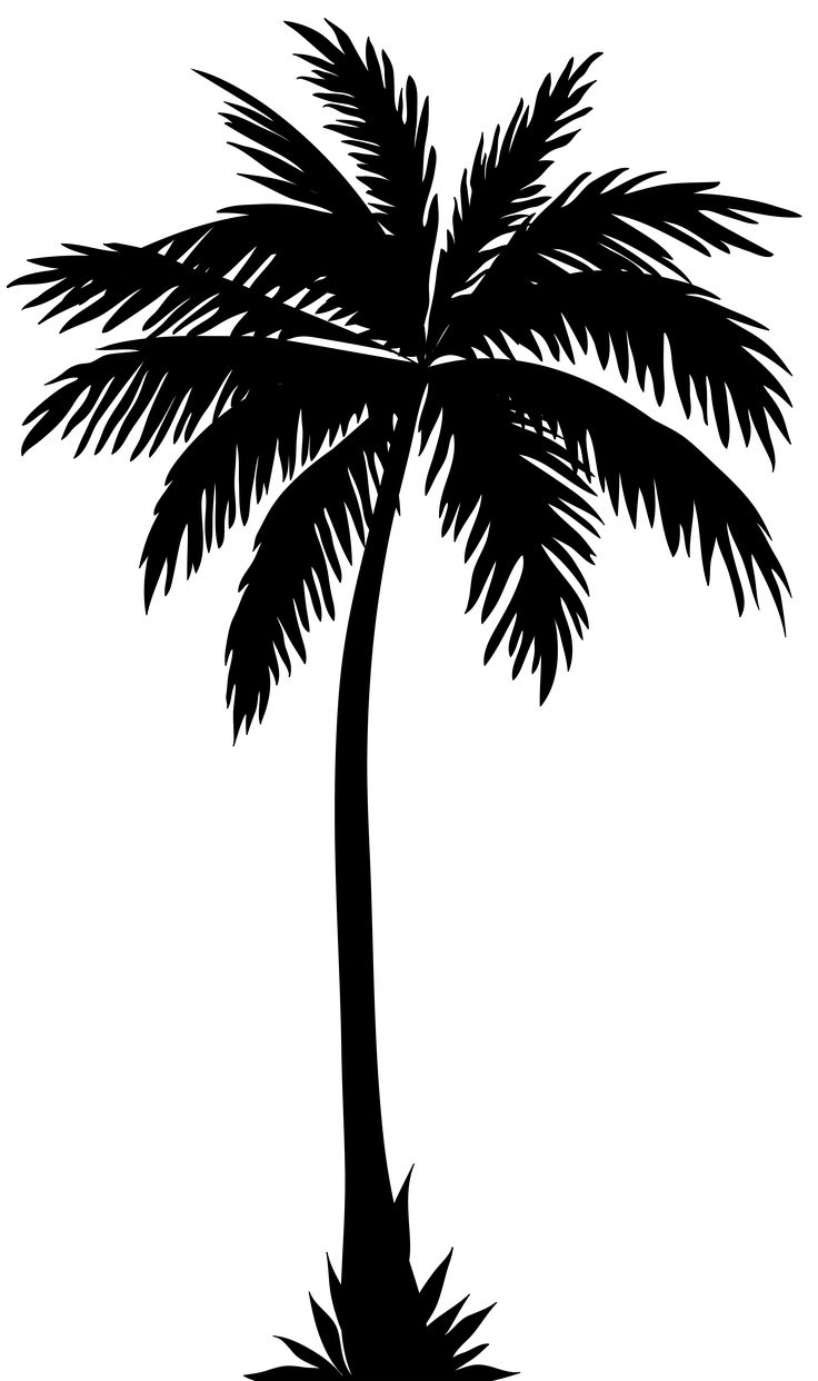 Tropical Tree Silhouette