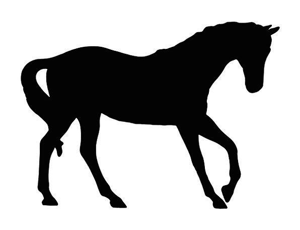 596x457 Horse, Mount, Dark, Outline, Plan, Black, Silhouette, Beautiful