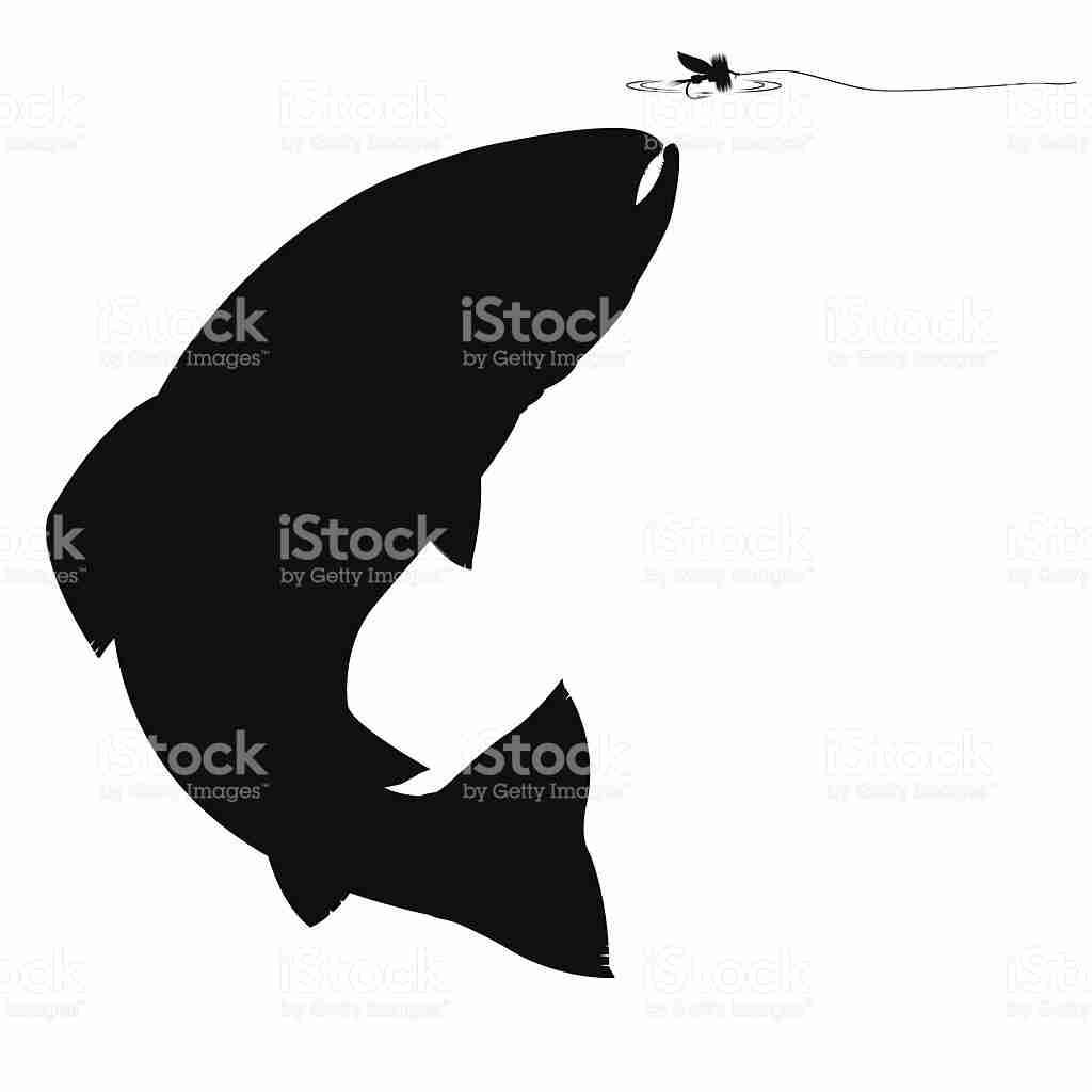 1024x1024 Salmon And Trout Fishing Silhouette Set Stock Vector Art More