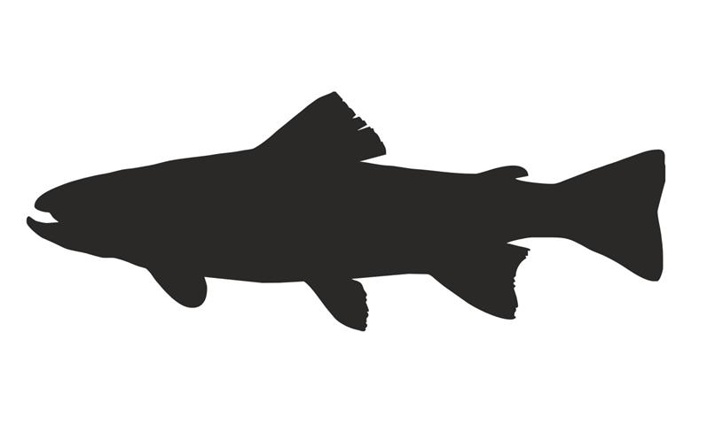 806x480 Trout Silhouette Decal Sticker