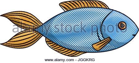 450x206 Vector Illustration Of A Big Blue Marlin Stock Vector Art