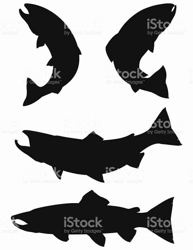 791x1024 Trout And Salmon Silhouettes Stock Vector Art More Images Of Fine