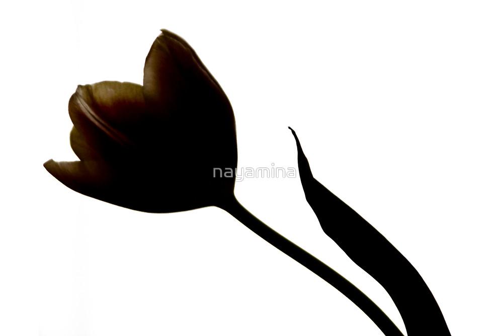 1000x667 Tulip Silhouette By Nayamina Redbubble