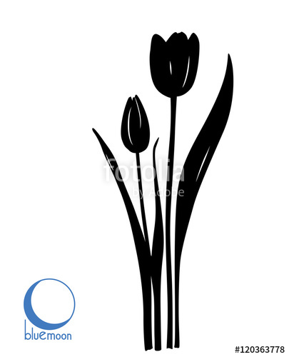 405x500 Flat Black Tulip Silhouette On White Background Stock Image