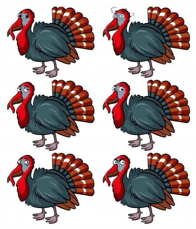 626x730 Turkey Bird Vectors, Photos And Psd Files Free Download